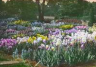 Pennsylvania Horticultural Society – Philadelphia Garden Photographs, 1900-1940: 2. John C. Wister Collection